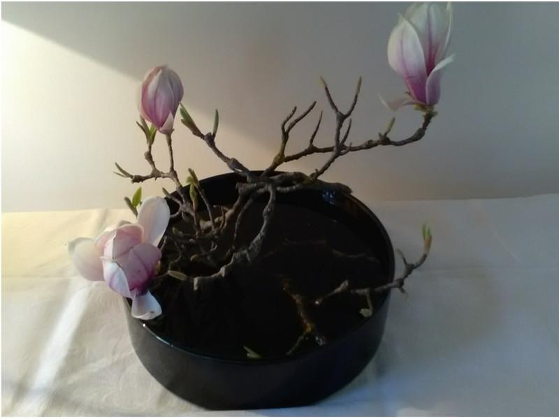 Magnolia en Ikebana