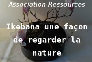 Ikebana une façon de regarder la nature